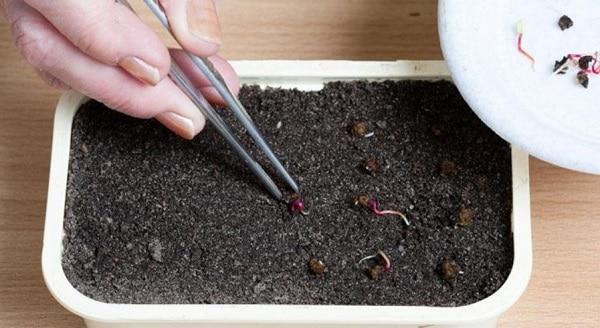 Почва для свеклы