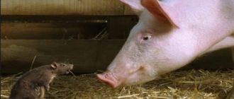 Гороскоп на 2020 год: Свинья (Кабан) мужчина или женщина