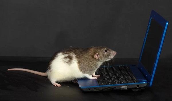 Гороскоп на 2020 год для Крысы