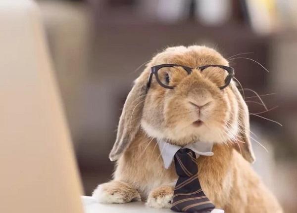 Гороскоп на 2020 год для Кролика (Кот)