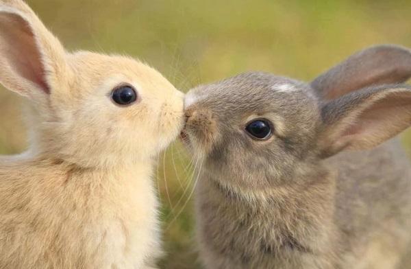 Гороскоп на 2020 год для Кролика (Кот): любовный