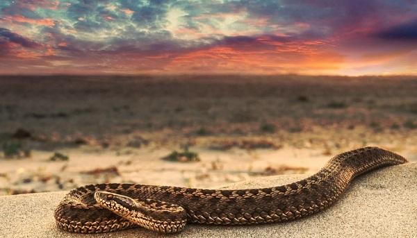 Песок и змейка