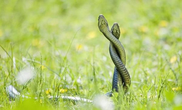 Гороскоп на 2020 год для Змеи: любовь и отношения